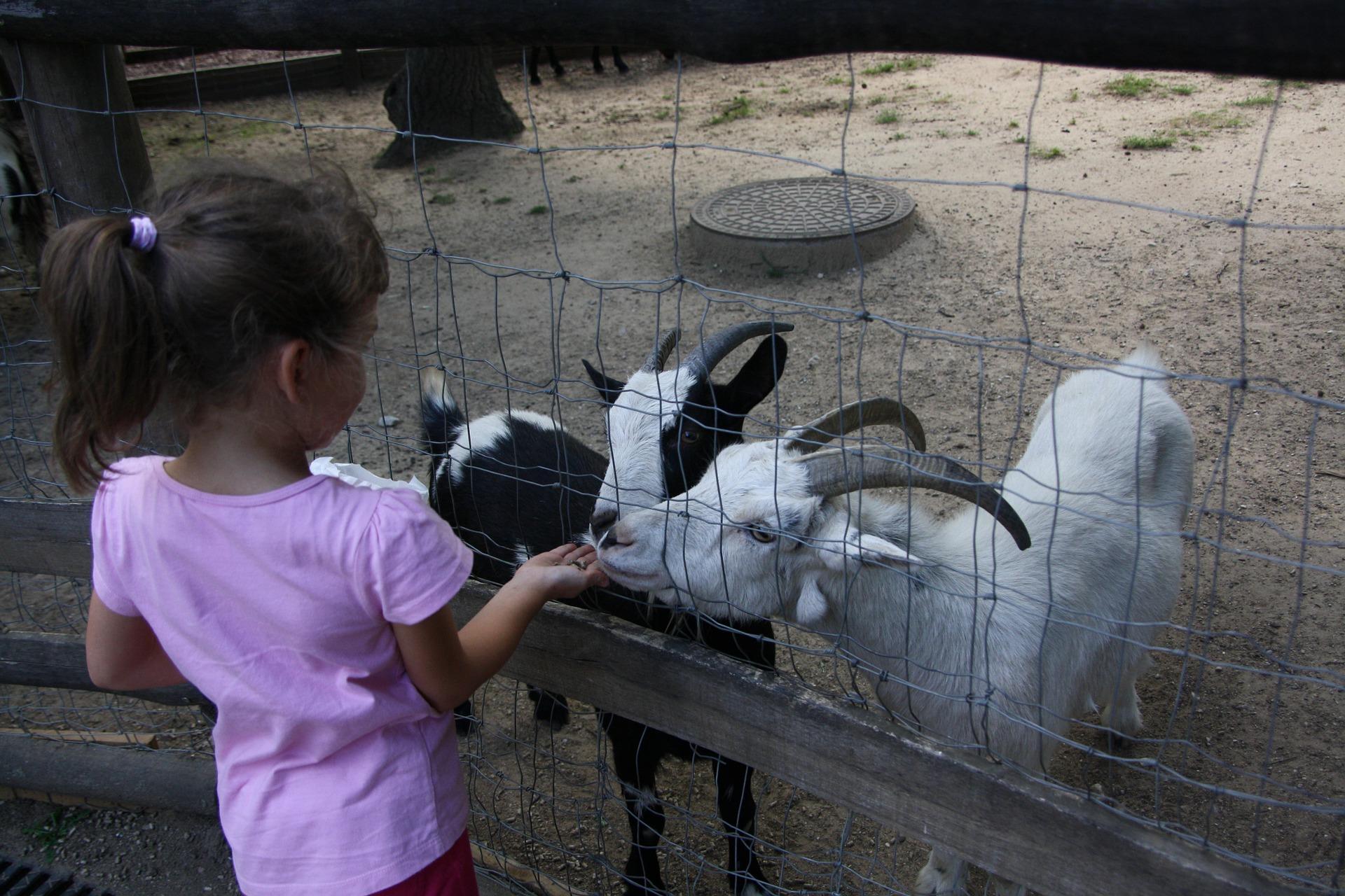 http://www.kleinerkinderpalast.de/wp-content/uploads/2016/10/goats-1241832_1920.jpg